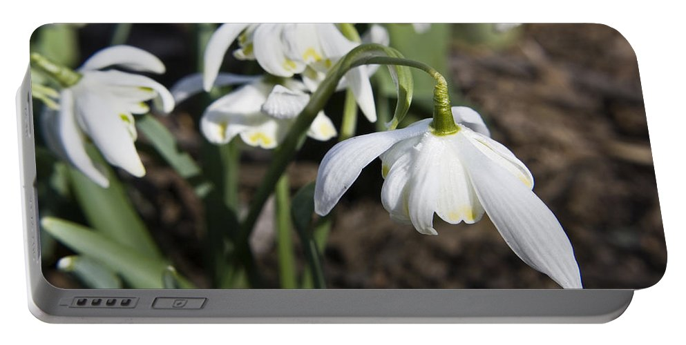 Snowdrops Portable Battery Charger featuring the photograph Snowdrops by Teresa Mucha