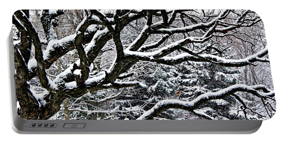 Old Portable Battery Charger featuring the photograph Snowfall And Tree by Elena Elisseeva