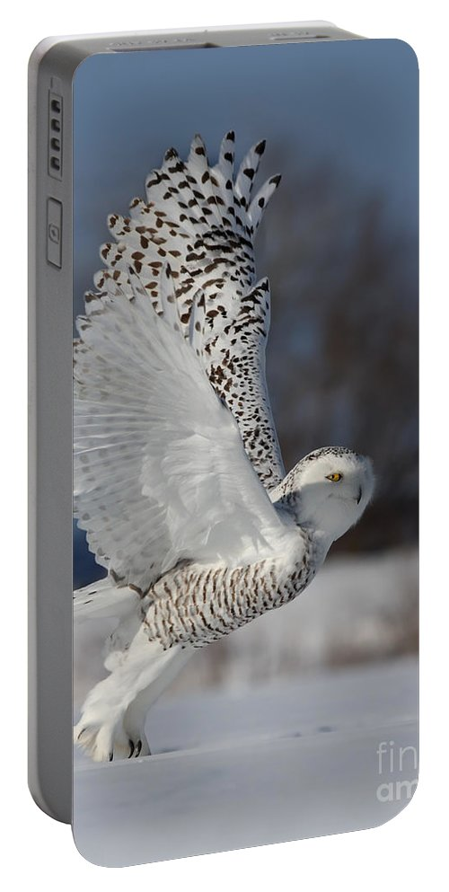 Angel Portable Battery Charger featuring the photograph Snowy Angel by Mircea Costina Photography