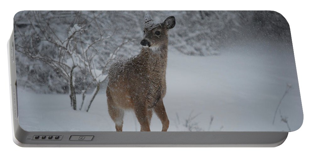 Deer Portable Battery Charger featuring the photograph Snowy Doe by Lori Tambakis