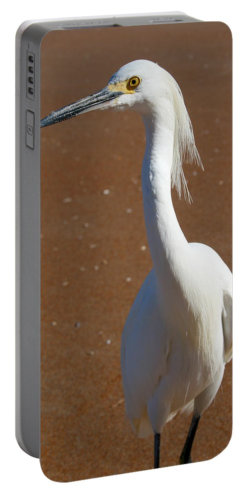 Bird Beach Sand White Bright Yellow Curious Egret Long Neck Feather Eye Ocean Portable Battery Charger featuring the photograph Snowy Egret by Andrei Shliakhau