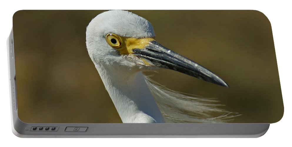 Birds Portable Battery Charger featuring the photograph Snowy Egret Profile 2 by Ernie Echols