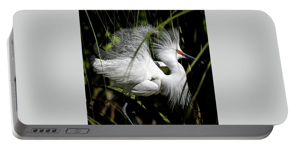 Snowy Egret Portable Battery Charger featuring the photograph Snowy Egret by Steven Sparks