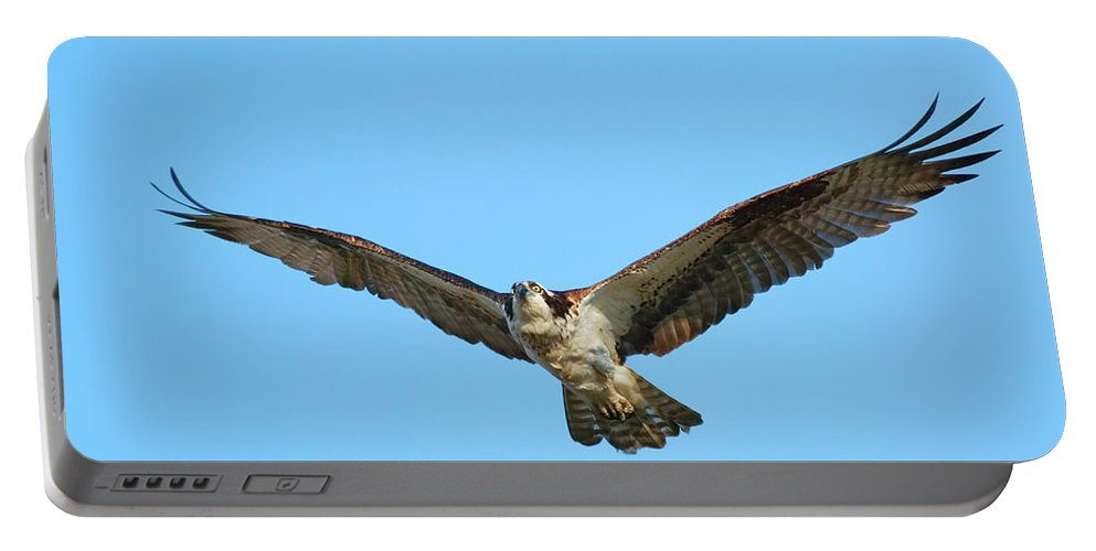 Osprey Portable Battery Charger featuring the photograph Soaring Osprey by Randall Ingalls