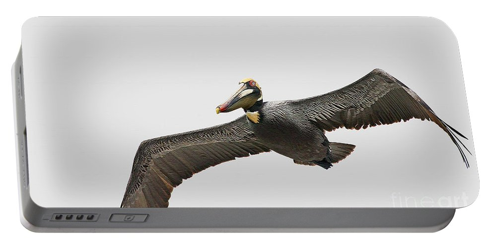 Bird Portable Battery Charger featuring the photograph Soaring Pelican Beauty by Deborah Benoit