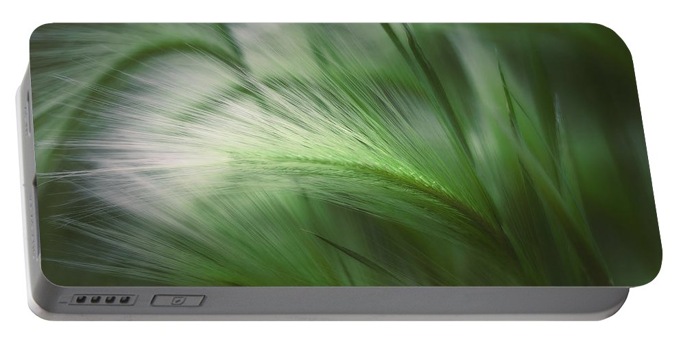 Grass Portable Battery Charger featuring the photograph Soft Grass by Scott Norris