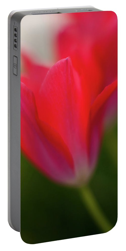 Red Portable Battery Charger featuring the photograph Soft Tulips by Mike Reid