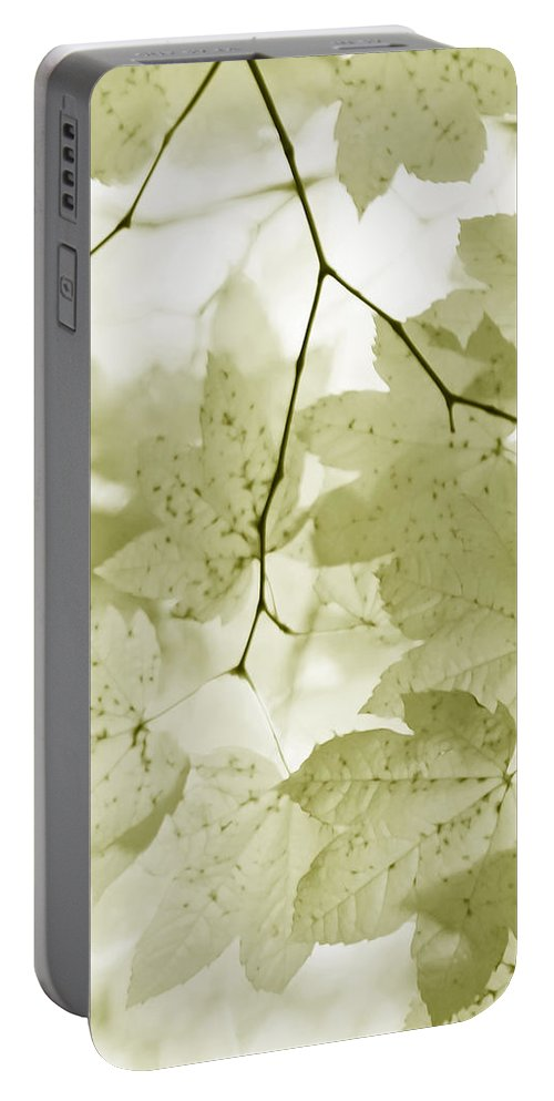 Leaf Portable Battery Charger featuring the photograph Softness Of Olive Green Maple Leaves by Jennie Marie Schell