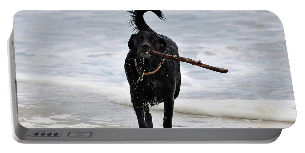 Dog Portable Battery Charger featuring the photograph Soggy Stick by Al Powell Photography USA