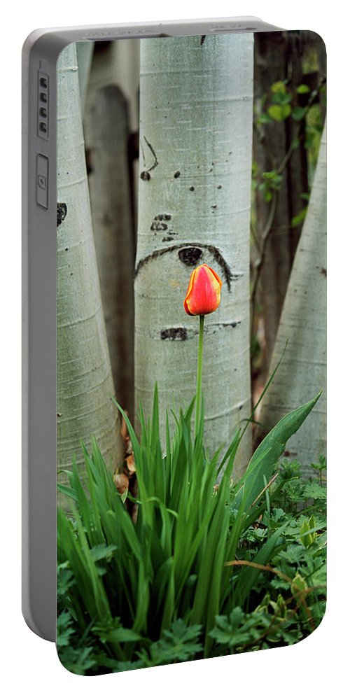 Flower Portable Battery Charger featuring the photograph Solace by Jim Benest