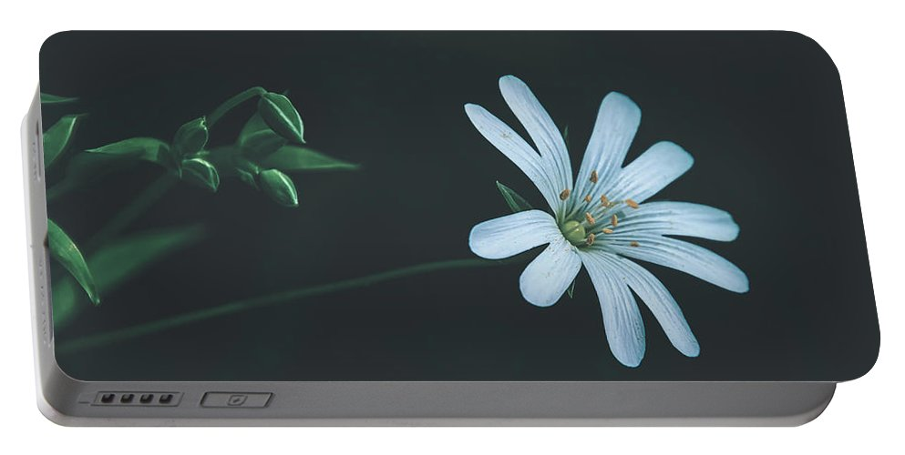 Flower Portable Battery Charger featuring the photograph Solitary Beauty by Pixabay
