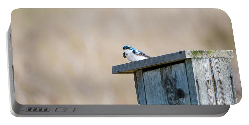 Tree Swallow Portable Battery Charger featuring the photograph Solitary by Deborah McCoig