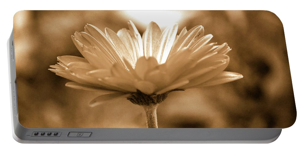 Daisy Portable Battery Charger featuring the photograph Some Shine by Lori Tambakis