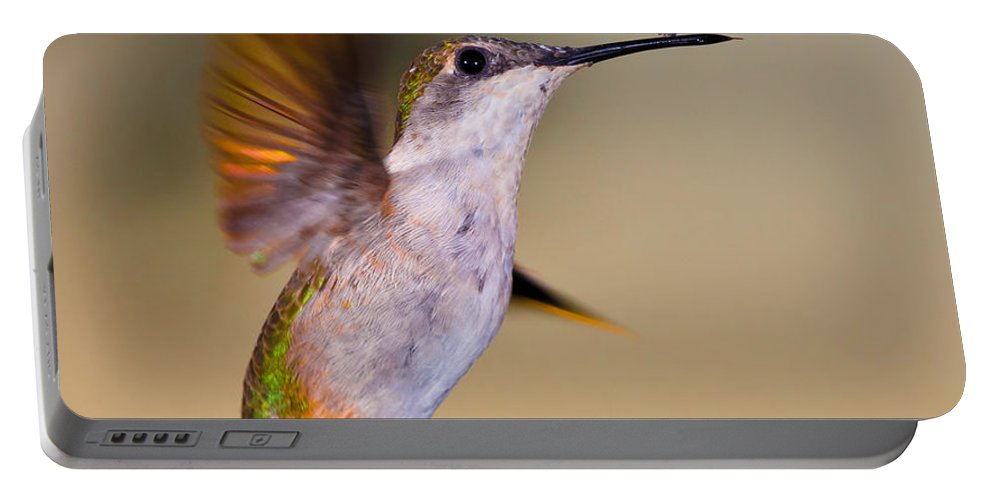 Animals Portable Battery Charger featuring the photograph Something On My Beak? by Rikk Flohr