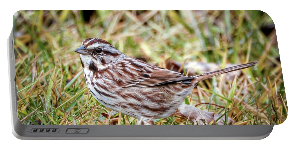 Song Sparrow Portable Battery Charger featuring the photograph Song Sparrow Sweetie by Kerri Farley