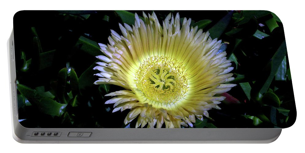 South Portable Battery Charger featuring the photograph South African Flower 1 by Douglas Barnett