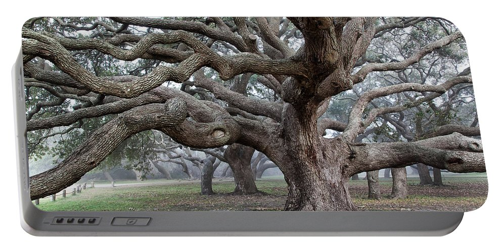 Tree Portable Battery Charger featuring the photograph Southern Live Oak by Inga Spence