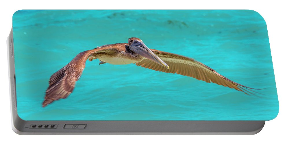Key Portable Battery Charger featuring the photograph Southern Most Pelican by Betsy Knapp