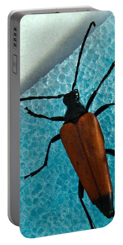 Cumberland Portable Battery Charger featuring the photograph Space Age Beetle by Douglas Barnett