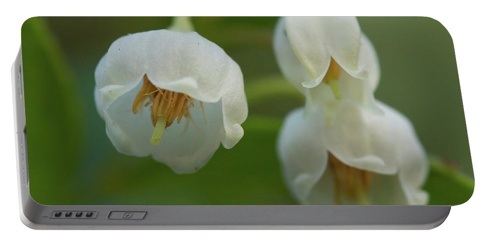 Vaccinium Arboreum Portable Battery Charger featuring the photograph Sparkleberry Trio by Paul Rebmann