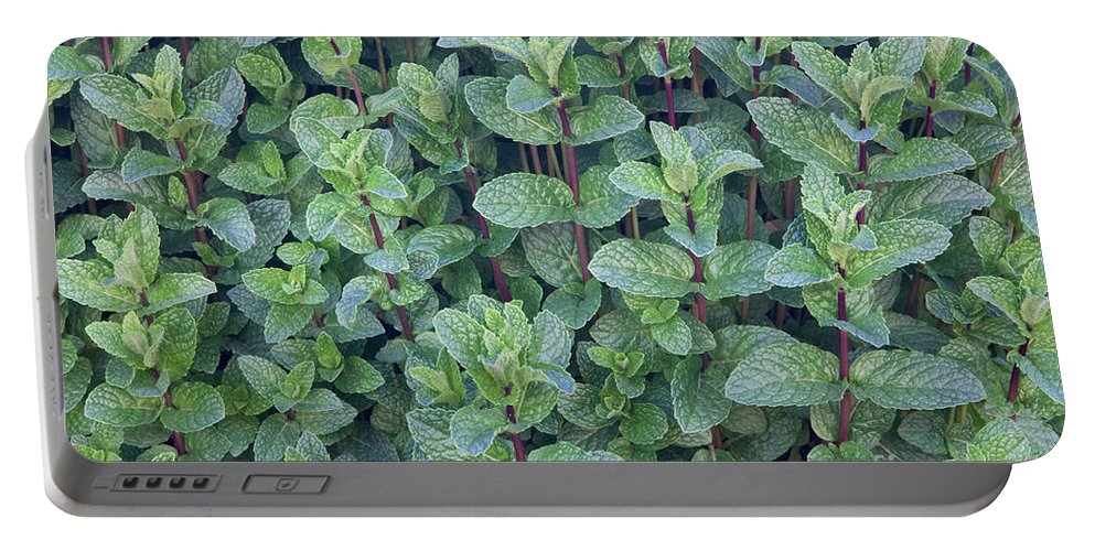 Plant Portable Battery Charger featuring the photograph Spearmint by Inga Spence