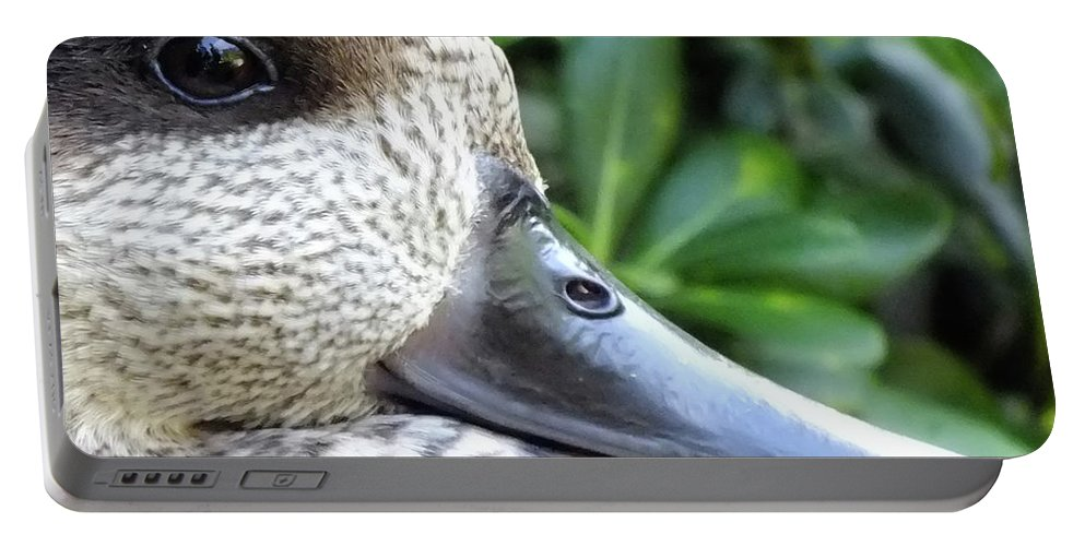 Duck Portable Battery Charger featuring the photograph Speckled Duck by Susan Junkins
