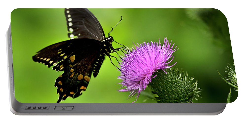 Butterfly Portable Battery Charger featuring the photograph Spicebush Swallowtail Butterfly by Christina Rollo
