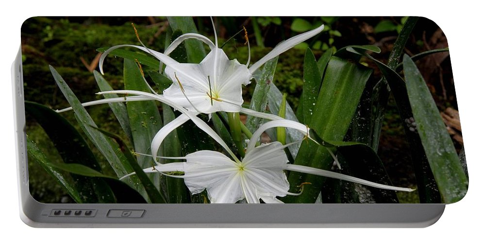 Spider Lily Portable Battery Charger featuring the photograph Spider Lilies by Barbara Bowen