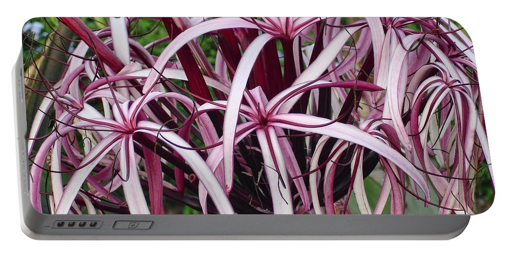 Flowers Portable Battery Charger featuring the photograph Spider Lily by Athala Carole Bruckner