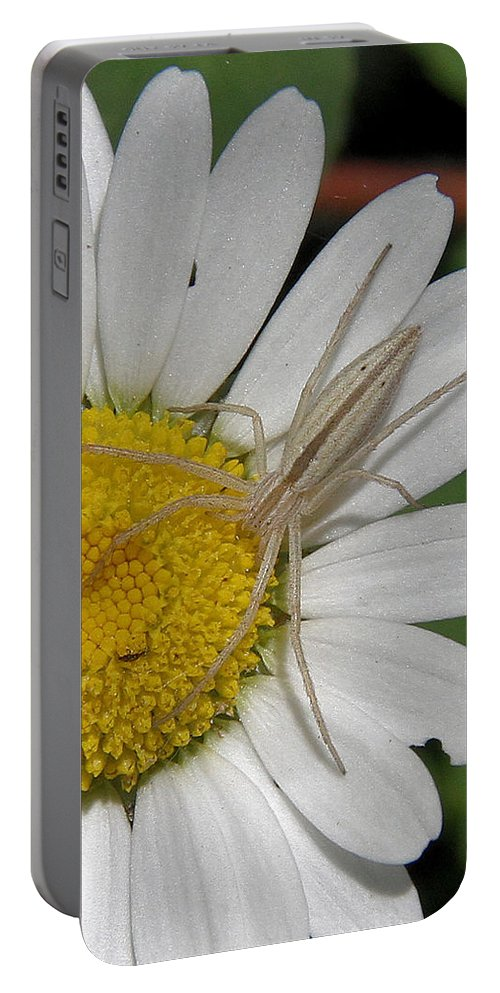 Spider Portable Battery Charger featuring the photograph Spider On Daisy by Doris Potter