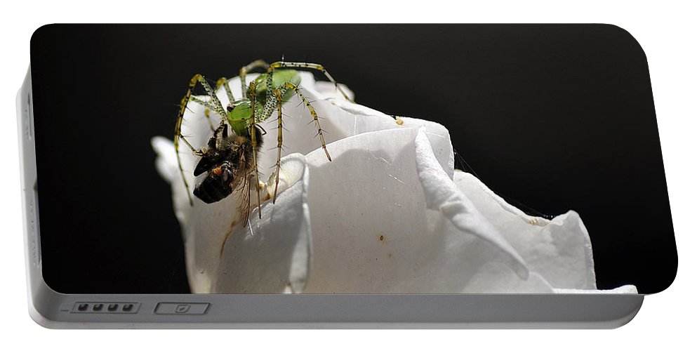 Clay Portable Battery Charger featuring the photograph Spider Vs Bee On Rose by Clayton Bruster