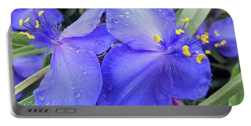 Spiderwort Portable Battery Charger featuring the photograph Spiderwort by Cindy Treger