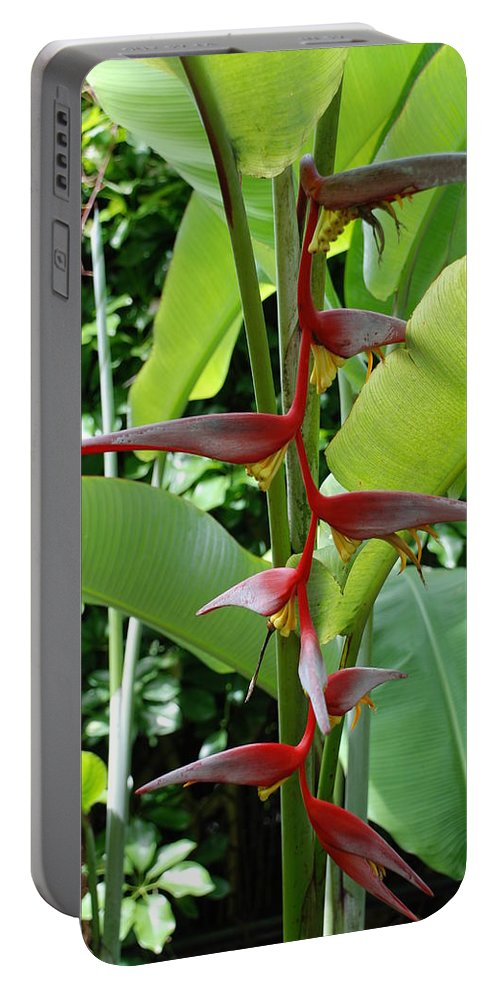 Macro Portable Battery Charger featuring the photograph Spike Tree by Rob Hans