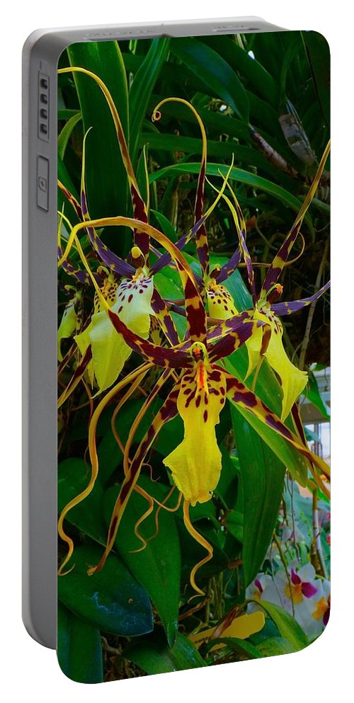 Chicago Botanic Garden Portable Battery Charger featuring the photograph Spindly Orchid by Tim G Ross