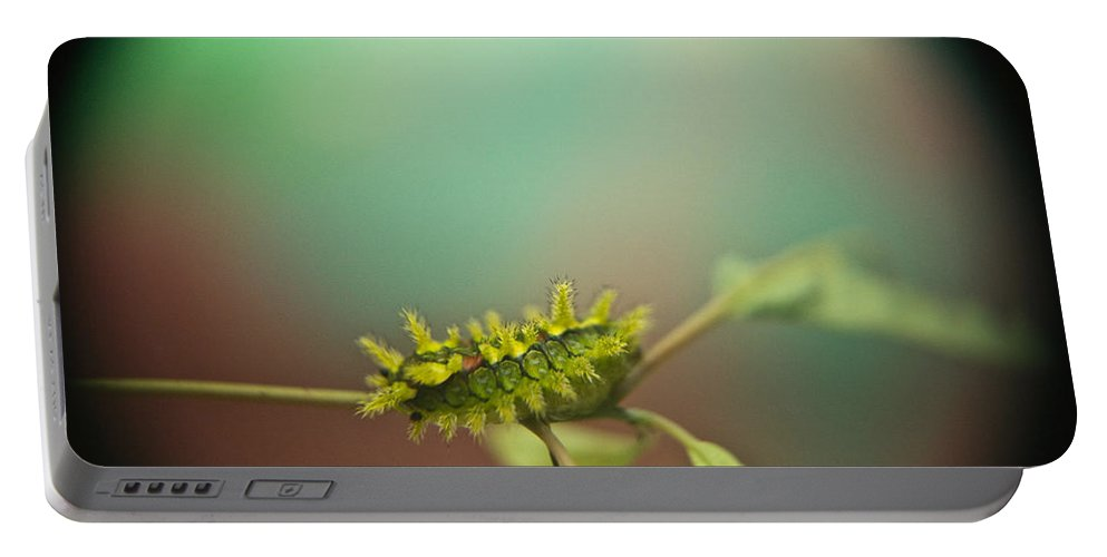 Cove Portable Battery Charger featuring the photograph Spiny Oak Slug Moth 8 by Douglas Barnett