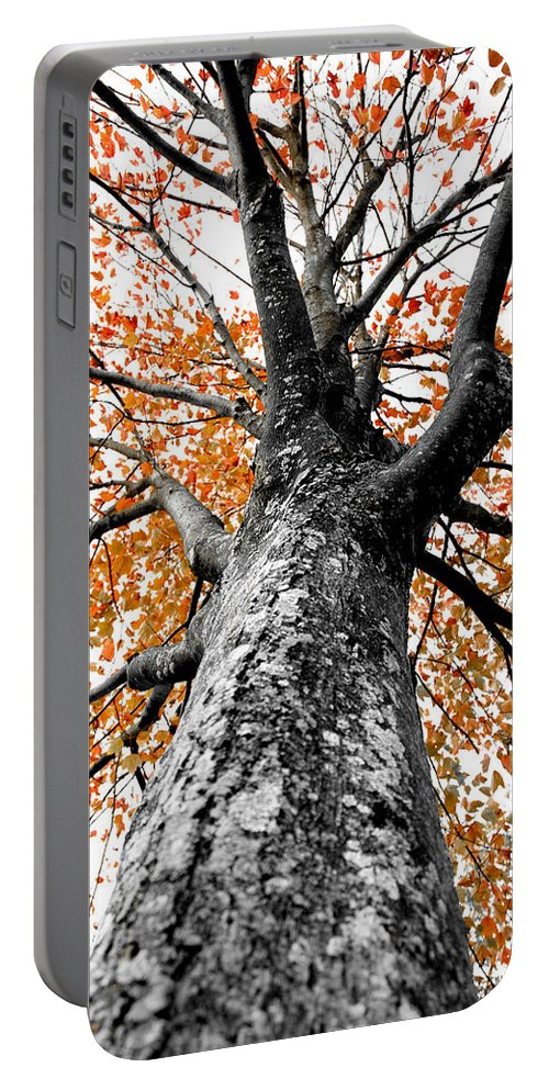 Tree Portable Battery Charger featuring the photograph Splash Of Color by Greg Fortier