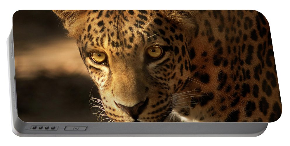 Leopard Portable Battery Charger featuring the photograph Spot Light by Virginia Dickens