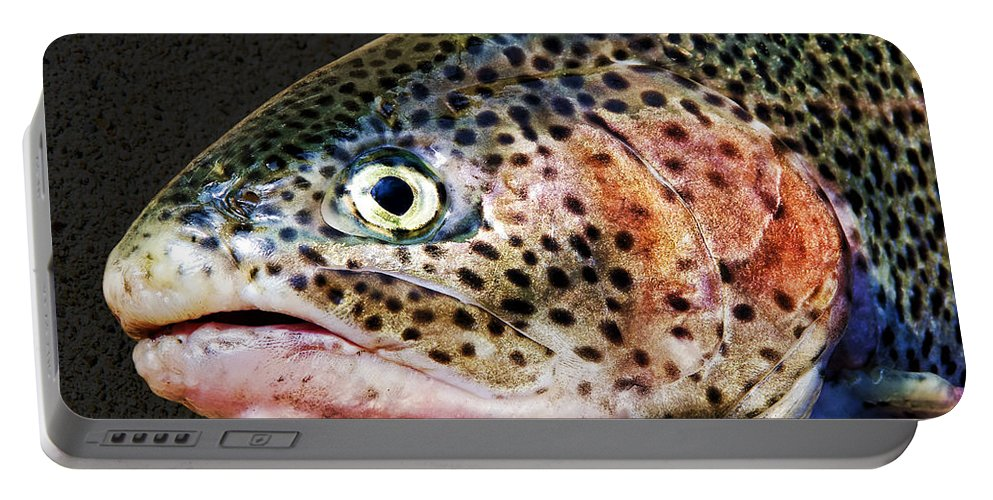 Fish Portable Battery Charger featuring the photograph Spotted by Kelley King