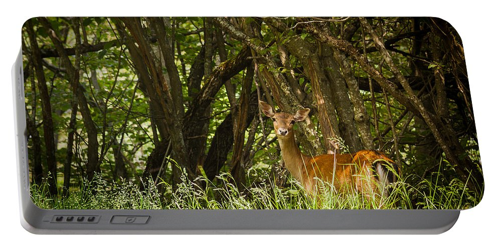 Nature Portable Battery Charger featuring the photograph Spotted by Mirko Chianucci