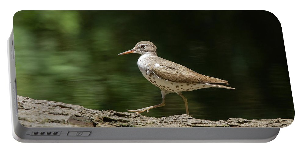 Sandpiper Portable Battery Charger featuring the photograph Spotted Sandpiper by Paul Rebmann