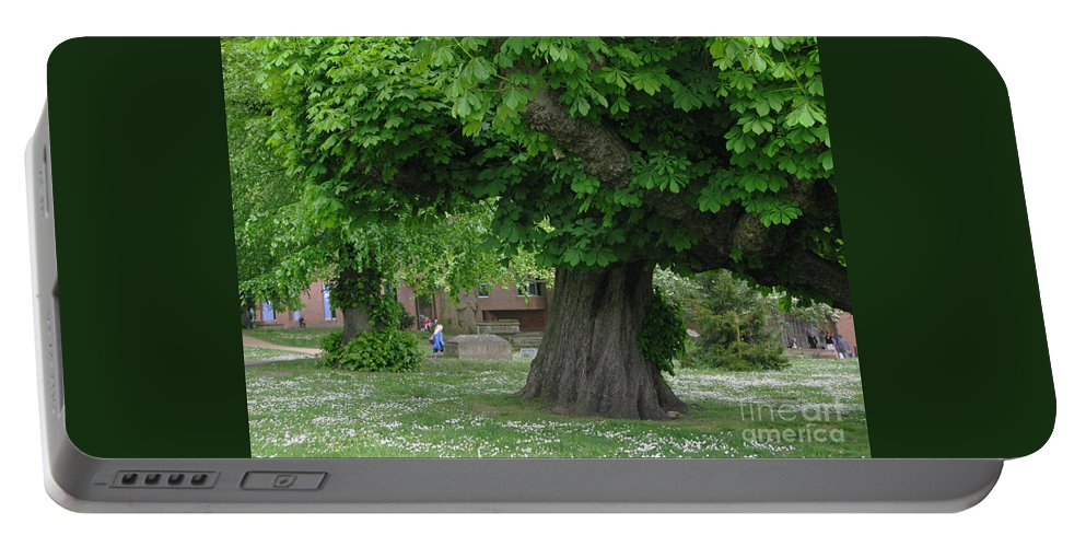 Horse Chestnut Portable Battery Charger featuring the photograph Spreading Chestnut Tree by Ann Horn