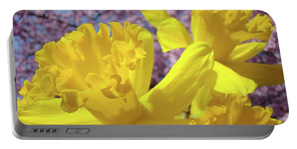 Flowers Portable Battery Charger featuring the photograph Spring Art Prints Yellow Daffodils Flowers Pink Blossoms Baslee Troutman by Baslee Troutman