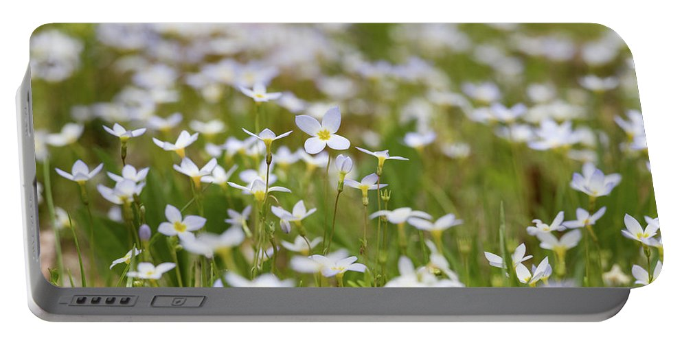 Flowers Portable Battery Charger featuring the photograph Spring Beauties by Holly Ross