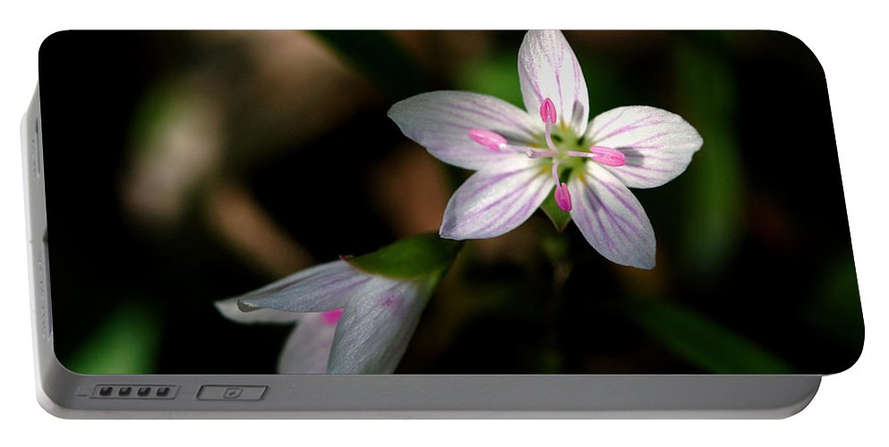 Spring Portable Battery Charger featuring the photograph Spring Beauty by Jack R Perry