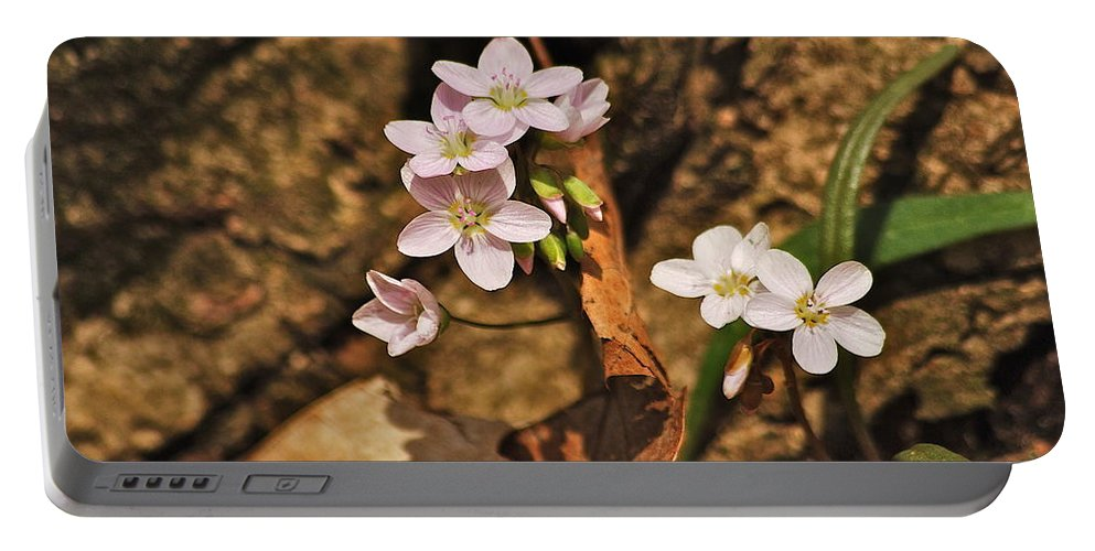 Spring Portable Battery Charger featuring the photograph Spring Beauty by Michael Peychich