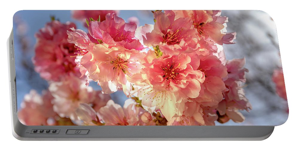 Ornamental Peach Spring Flowers Macro Pink Flora Floral Portable Battery Charger featuring the photograph Spring Blossoms by Ao Images