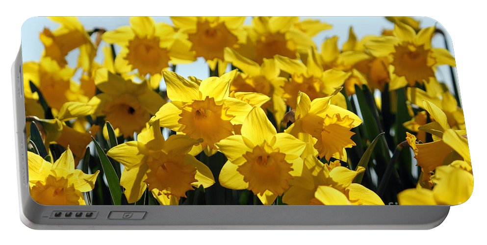 Daffodils London Portable Battery Charger featuring the photograph Spring Daffodils by Julia Gavin