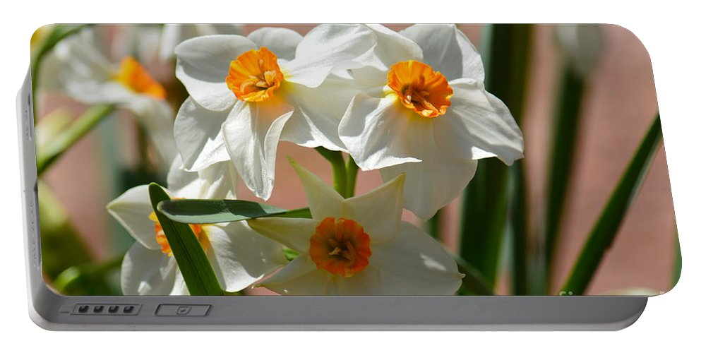 Spring Daffodils Portable Battery Charger featuring the photograph Spring Daffodils by Maria Urso