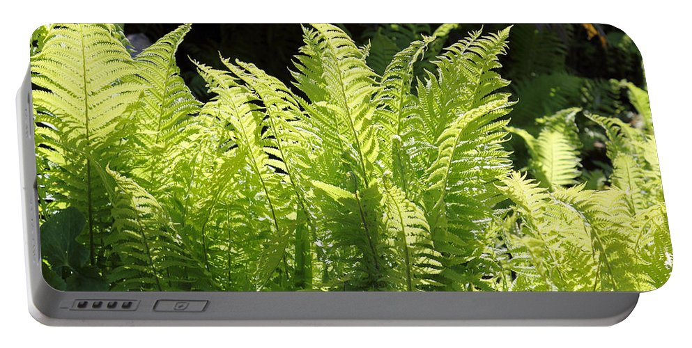 Spring Fern Green Fronds Leaves Portable Battery Charger featuring the photograph Spring Fern Fronds by Julia Gavin