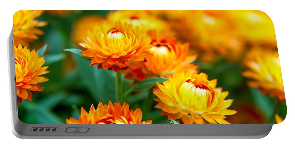 Spring Flowers Portable Battery Charger featuring the photograph Spring Flowers In The Afternoon by Az Jackson
